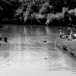 Paysages_NB 135_1