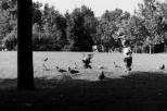 Paysages_NB 138_1