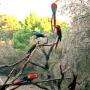 Perroquets_003_1