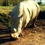 rhinos_002_1