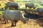 rhinos_004_1