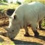 rhinos_005_1