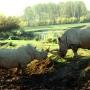 rhinos_006_1
