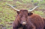Vaches_003_1
