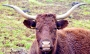 Vaches_004_1