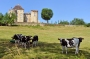 Vaches_096_1