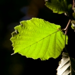 Végétal_018